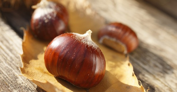 Chestnut days in Lana, South Tyrol